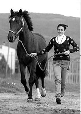 匹.之所以选择马莱玛娜马,因为这种马匹与当年马可.波罗所用马匹