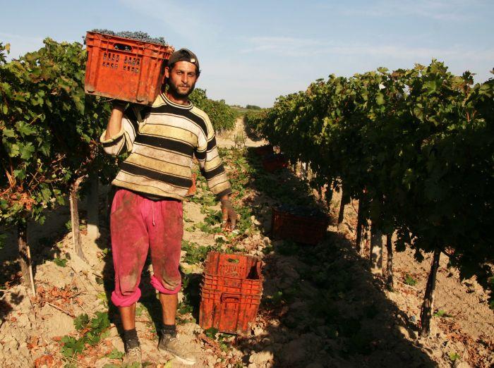 日,工人在距离马其顿首都斯科普里120公里处的蒂克韦什地区的一