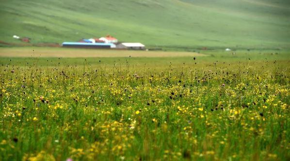 这是锡林郭勒盟乌拉盖管理区贺斯格乌拉牧场的草原景色
