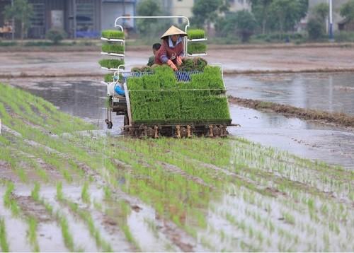 谷雨时节,中国农民在进行机械插秧作业.(澳大利亚东亚论坛网站)图片