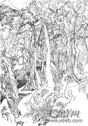 海南植物手绘线稿