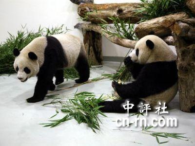 台北的木栅动物园,冷冷的天,热热的人龙,来自全台各地的游客大排长龙
