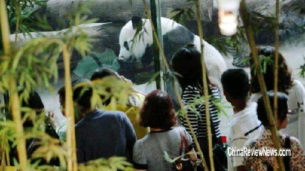 台北市立动物园27日为大熊猫团团,圆圆庆祝7岁生日,也是团团,圆圆在