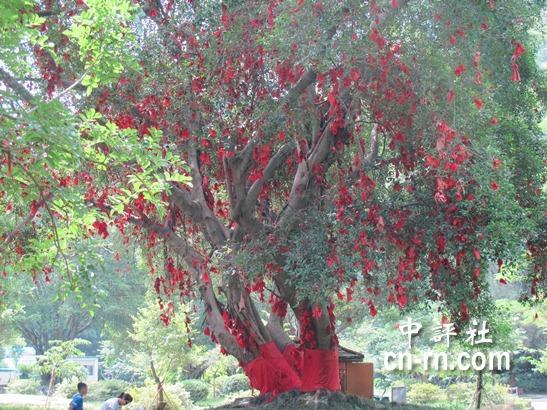 许愿树上挂满了心愿,沉甸甸地挂了满枝