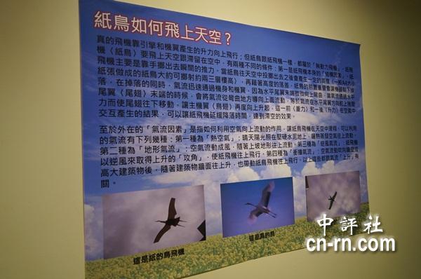 纸飞机与鸟类飞翔原理