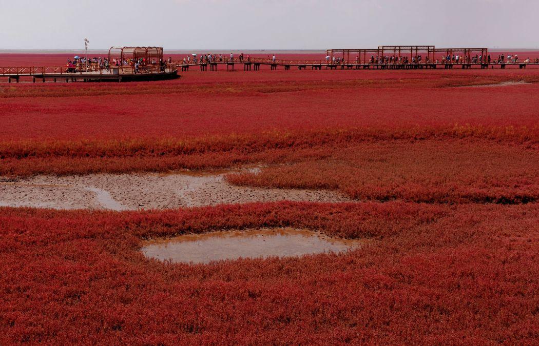 8月29日,游客在红海滩风景区游览.新华社