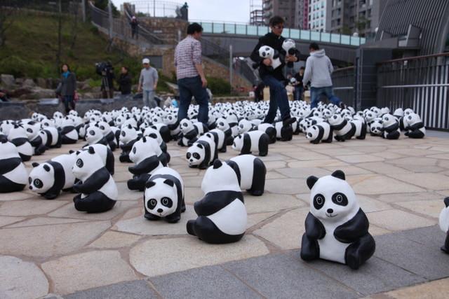 想看大熊猫圆仔不用到木栅动物园人挤人,2月28日将有1600只圆仔纸雕在
