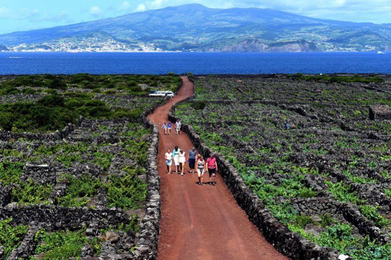 葡萄牙亚速尔群岛皮库岛葡萄园区景观