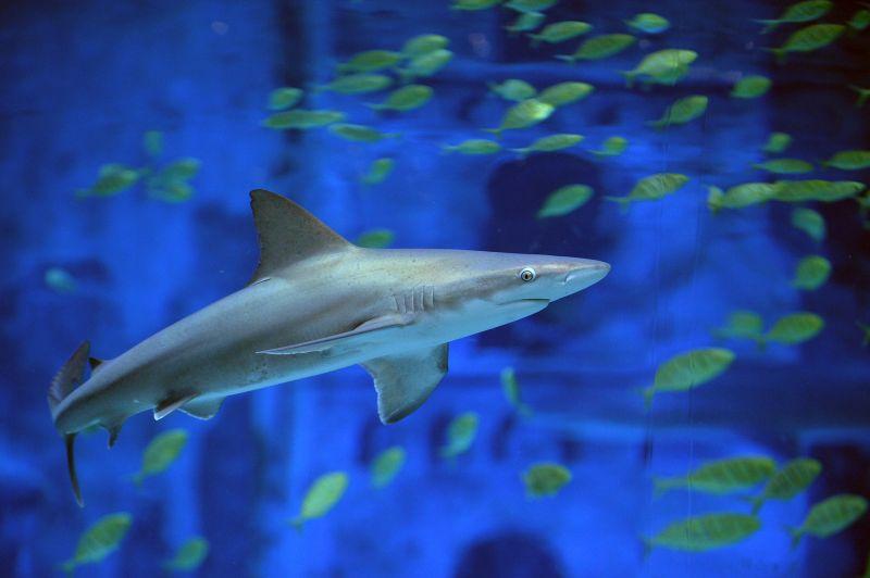 北京海洋馆鲨鱼小镇启动(组图)