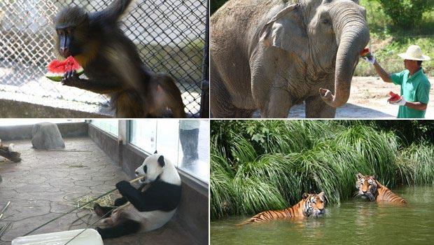雅戈尔动物园金刚大猩猩图片