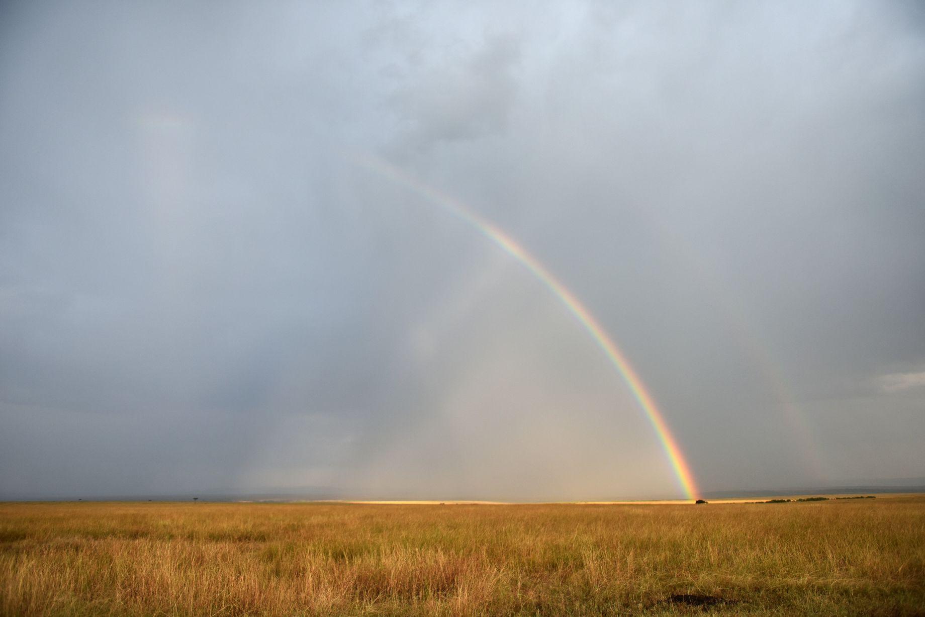 野生动物天堂:肯尼亚马赛马拉国家保护区