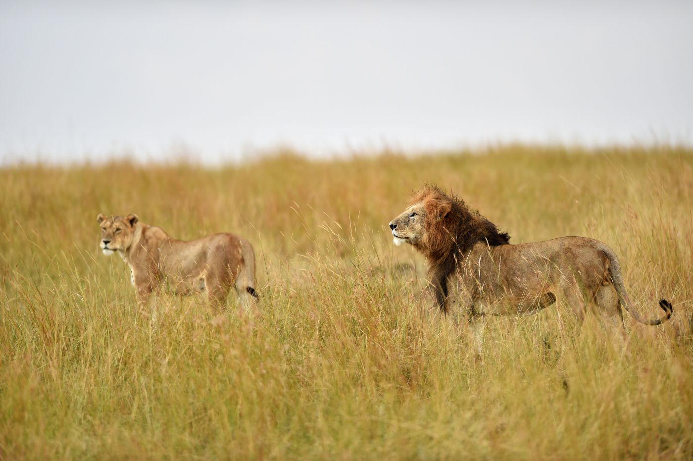 野生动物天堂:肯尼亚马赛马拉国家保护区(图)