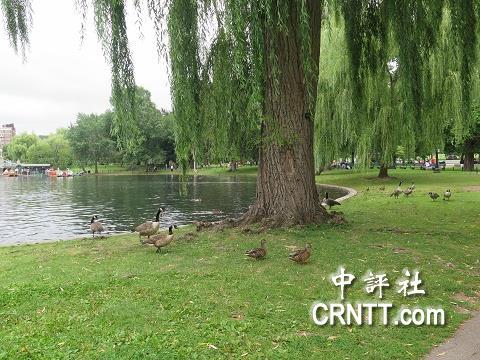 中評鏡頭:波士頓有一個美國最古老的公園