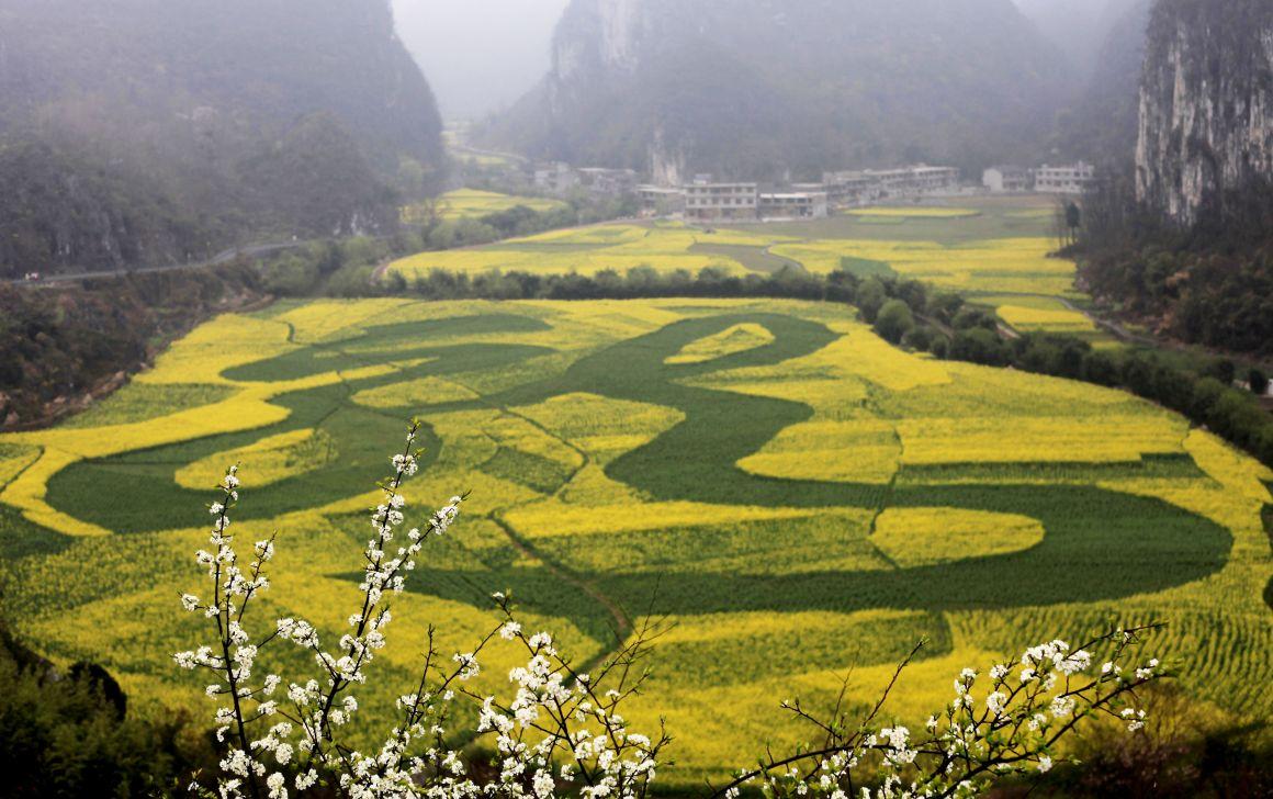 """月12日在贵州省安顺市龙宫风景区拍摄的""""绣""""在油菜花海中的繁体""""龙""""字"""