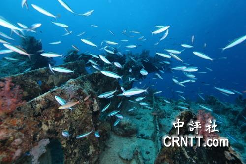 郑明修潜水拍摄的南海太平岛海底美景.(照片由郑明修提供)