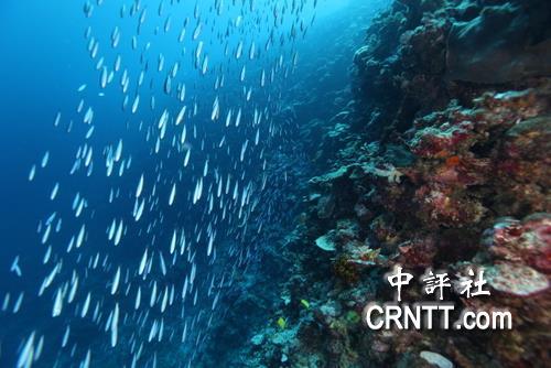 郑明修潜水拍摄的南海太平岛海底美景