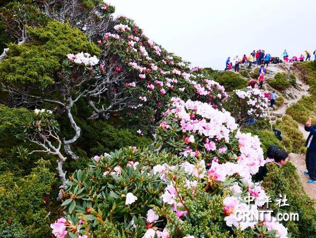 中評鏡頭:合歡山花季觀星雲海正美