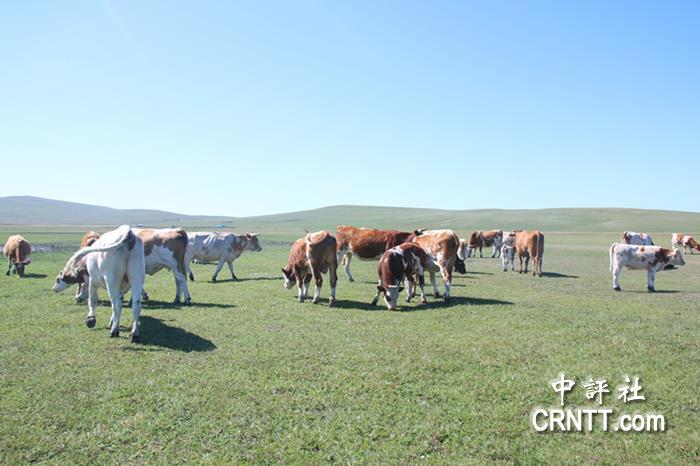 急速赛车345678玩法:去呼�����大草原 看奶牛的悠�e日常
